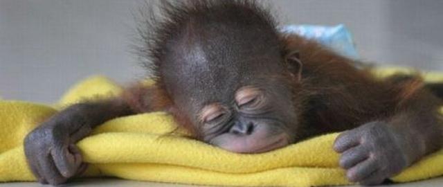 Отдыхающая обезьянка