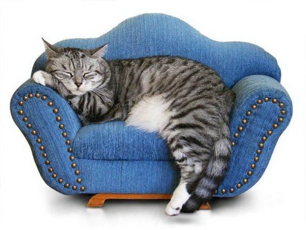 Кошки как элемент спокойствия