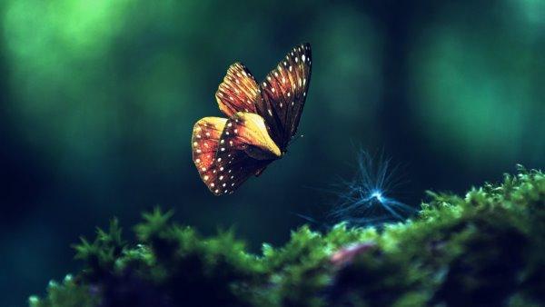 превращается в миллион разноцветных бабочек