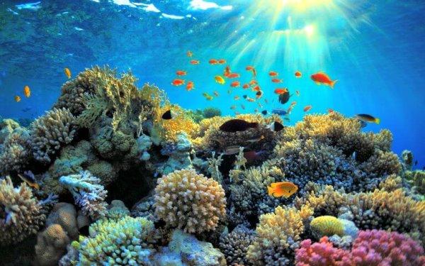 Релаксация под водой
