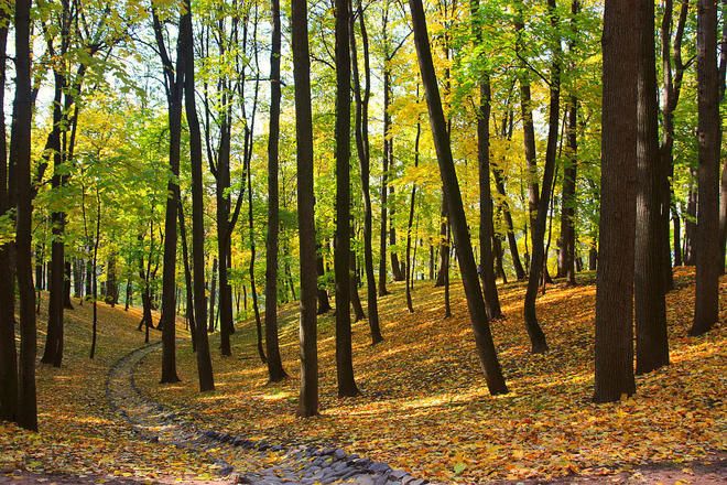 Осенняя релаксация.