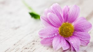 Нежный цветок и кактус