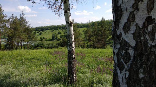 Практика восстановления энергии при работе с деревьями